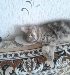 Пропал кот:( в с. Донском
