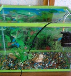 Аквариум с рыбками 25 литров