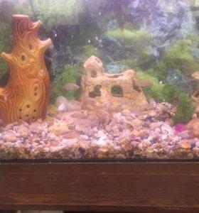Аквариум 100-110л с рыбками (цихлиды)