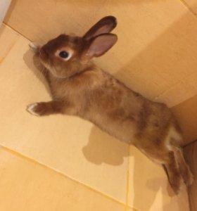 Кролик декоративный с клеткой