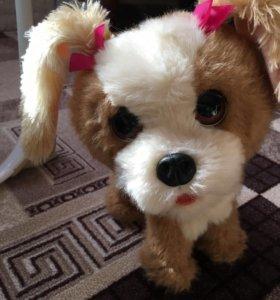 Живой игрушечный собачка
