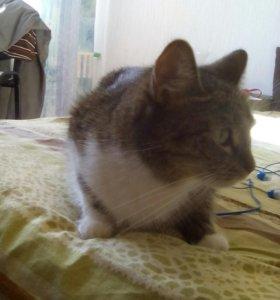 Кошечка ищет кота