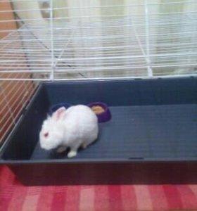 Продам кролика