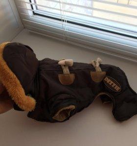 Комбинезон для карманной собаки