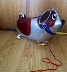 Ходячий шар собака