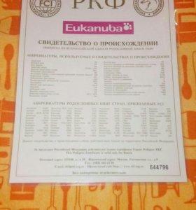 Продам срочно документы РКФ на шарпея 7лет