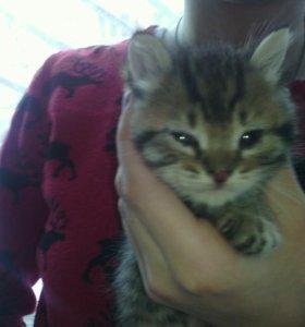 Котята в добрые руки от красивой мамки