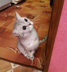 Кошка, девочка, скоро будет 5 лет