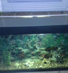 Аквариум 100л с рыбами