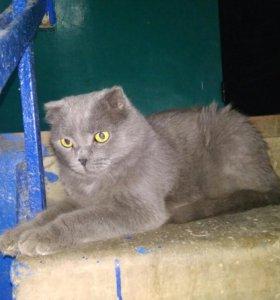 Кошка найдена