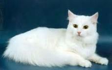 Кот в добрые руки😄😘😘😍