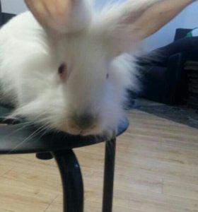 Кролики за месяц