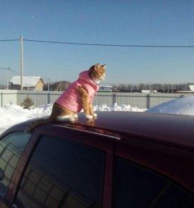 Кошечка ищет котика!!!