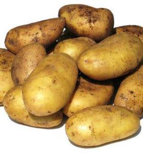 Картошка домашняя крупная.