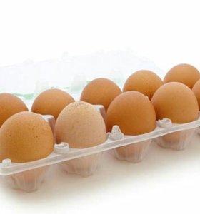 Домашние куринные яйца