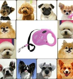 Поводок для маленьких собак