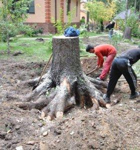Выкорчевываю деревья.