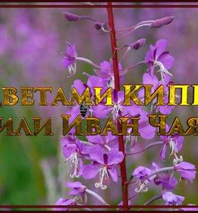 Иван Чай Майский гранулированный, чёрный