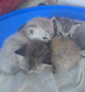 котята,27 февраля