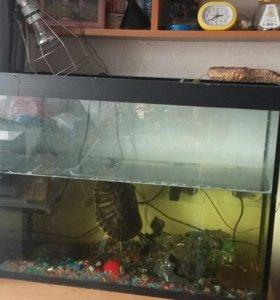 Продам большу черепаху вместе с аквариумом.