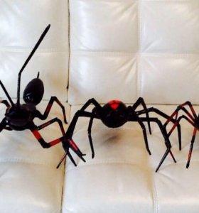 Муравьи и пауки