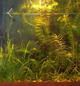 Аквариумные растения (набор)