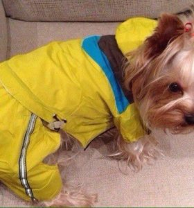 Дождевик- ветровка для собак