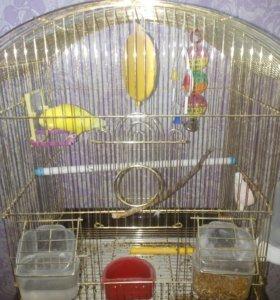 Продам попугая с клеткои