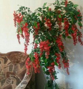 дерево Глициния