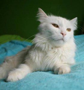 Котик Барсик нуждается в семье