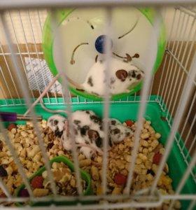Японские мыши
