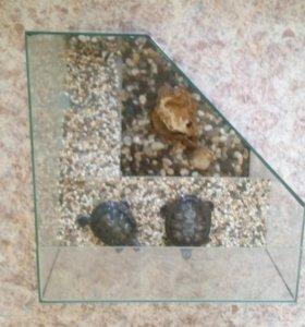 Продам Аквариум для черепах + 2 черепахи в подарок