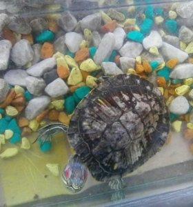 Черепаха водная