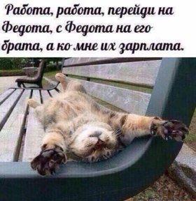"""Кот годовалый """"крысолов"""""""