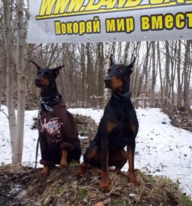 Дрессировка. Собак и щенков.