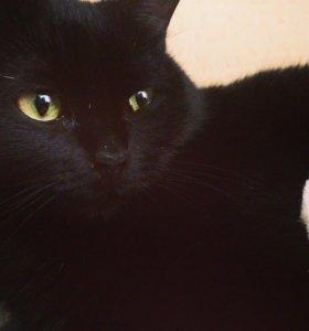 Кошка, котёнок