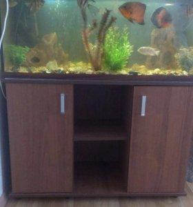 Продаю аквариум на 200 литров со всем что внутри