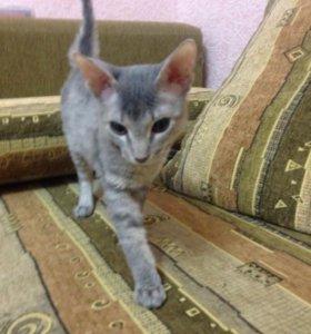Хорошие котята