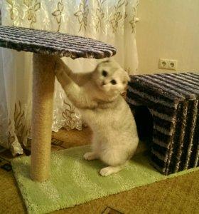 Кошачий домик с когтеточкой