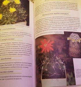 Книга Ваш любимый кактус