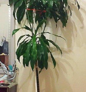 Дерево живое