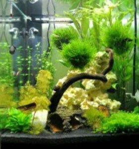 Обслуживание и дизайн аквариумов