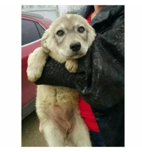 Собаки-щенки-даром