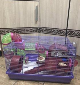 Продам клетку с 2-я хомячками ( джунгарики )