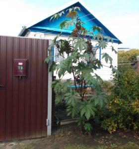 Дом 60 кв.м с участком 10 соток в селе Багаевка