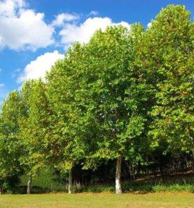 Пилим деревья