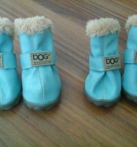 Ботиночки для собак.