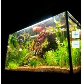 Растения аквариумные, прополка