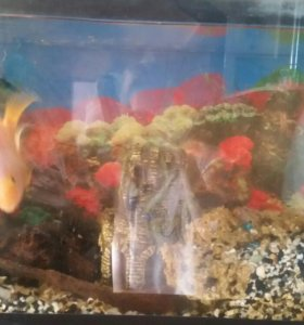 аквариум для рыб 100 л