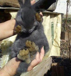 Кролики